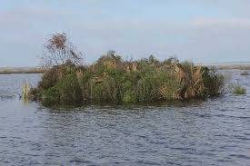 Duck Blind Images Drive In Shooting Louisiana Sportsman Sidebars La