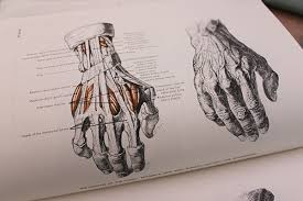 how to draw lifelike hands in 4 steps craftsy blog