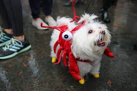photos 26th annual tompkins square halloween dog parade in east
