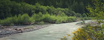 Washington rivers images White river american rivers jpg