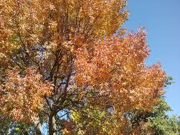 plants native to missouri epitaph to a tree powell gardens kansas city u0027s botanical garden