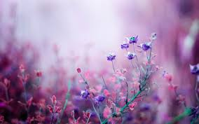Images Flowers Hd Flower Wallpaper Collection 29