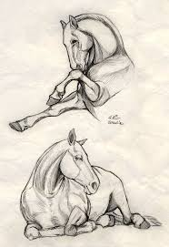 Drawing by Best 25 Drawings Of Horses Ideas On Pinterest Horse Sketch