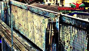 gallery bird netting
