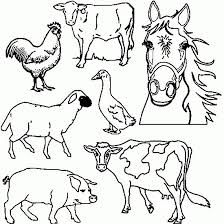 7 farm animals colouring images animal
