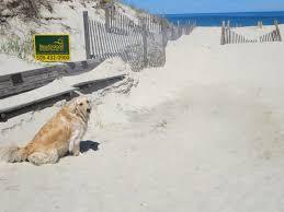 memorable cape cod pet friendly vacation rentals u0026 properties nevr