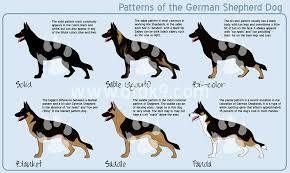 Light Sable German Shepherd Sprague U0027s German Shepherds California German Shepherd Dog Breeder