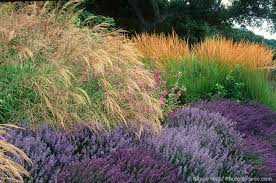 49 best california native plants the summer dry garden summer dry celebrate plants in summer