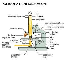 Parts Of A Compound Light Microscope Microscopy Kullabs Com
