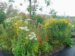 native plant nursery pa pollinator patch starter kits now available edge of the woods