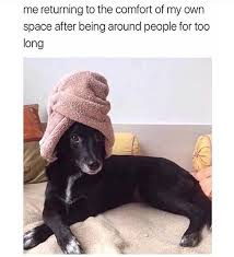 Animal Memes - 10 hilarious animal memes that will make your day so much better