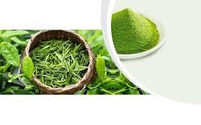 Teh Hijau Serbuk china green tea powder manufacturers and suppliers borong kilang