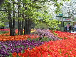 Botanical Garden Cincinnati Tulip Display Picture Of Cincinnati Zoo Botanical Garden