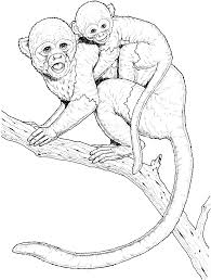 printable monkey coloring pages realistic monkey coloring pages coloring home