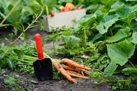 plan and grow a fall vegetable garden