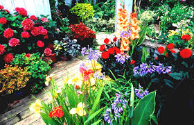 primitive flower garden ideas the best flowers picking most