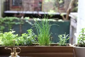 Herb Window Box Indoor Diy Shade Tolerant Herbs To Grow In Your Apartment Gardenista