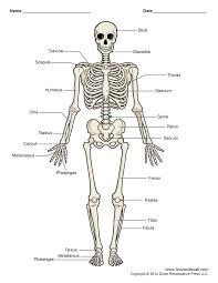 spooky skeleton png kids skeleton drawing free download clip art free clip art