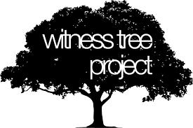 witness tree project