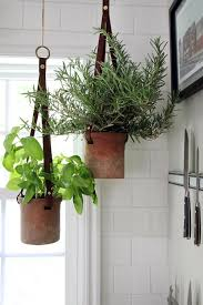 hanging herbs in the kitchen herbs kitchens and plants