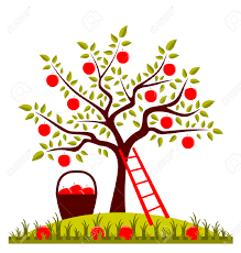 apple tree images u0026 stock pictures royalty free apple tree photos