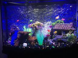 best 25 fish tank themes ideas on aquarium ideas