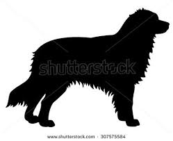 australian shepherd illustration australian shepherd stock images royalty free images u0026 vectors