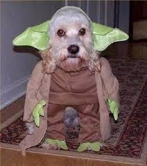 Human Dog Halloween Costumes Dog Halloween Careers Animals