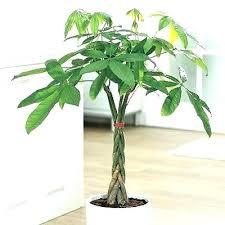 good low light plants best low light office plants best office plants ideas on pinterest