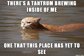 Tantrum Meme - angry cat is not pleased with harvey imgur