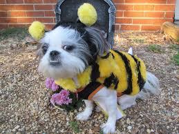 halloween puppies wallpaper shih tzu puppy dressed up as bumblebee halloween dog photo