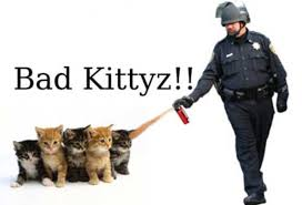 Pepper Spray Meme - pepper spray cop meme stop your cats from spraying in your home