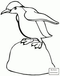 coloring pages for kids birds penguins northern rockhopper penguin