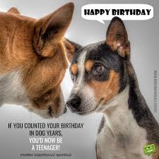 Funny Animal Birthday Memes - if you counted your birthday in dog years you d now be a teenager