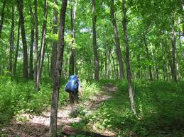 Iowa forest images Best hiking and camping in iowa coocookachoo jpg