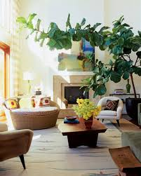 Saofise Aveji by Indoor Apartment Plants House Plants For Urban Dwellers Brit Co