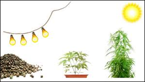 proper lights for growing weed growing cannabis tips with heat and light