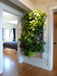 wall garden indoor plants on walls vertical garden systems low light tropical living art