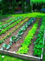 starting a garden from scratch gardens backyard and garden ideas