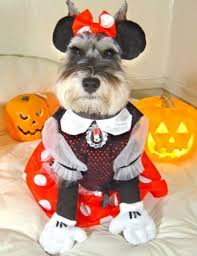 Dog Halloween Costumes 301 Disfraces Perros Images Costumes