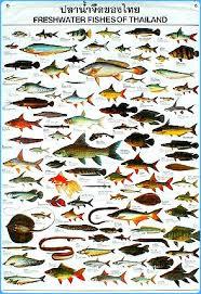 types of aquarium fish with names