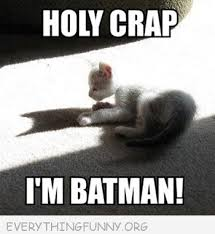 Im Batman Meme - funny caption cat shadow holy crap i m batman that s funny