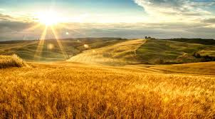tuscan yellow tuscany pictures best landscapes food and spots gallery