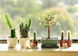cactus mini garden best mini cactus garden ideas on mini cactus