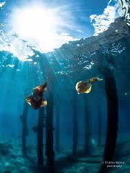 Azure Vase Sponge Facts Underwater Photo Location Turtle Reef