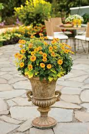 best thriller plants for containers hgtv