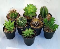 instant cactus succulent collection 8 plants 2 pots hirts