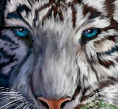 amazing white tigers with blue wallpaper pictures