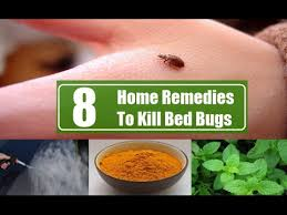 natural bed bug remedies how to get rid of bed bugs naturally youtube