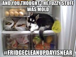 Fridge Meme - husky in fridge meme generator